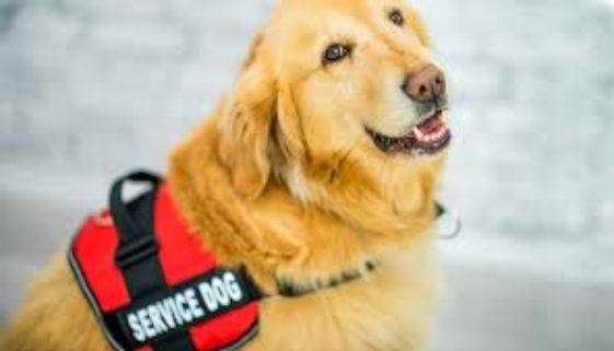 service dogs help with wheelchair users